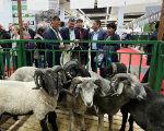 Калмыцкие животноводы завоевали 6 золотых медалей на выставке «Золотая осень»