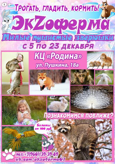 Выставка милых и пушистых животных «Экзоферма» в Элисте.