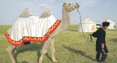 Из Элисты в Париж на верблюде