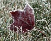 Ночные заморозки в Калмыкии сохранятся